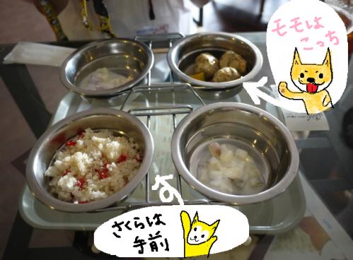 モモちゃんとさくらのご飯1