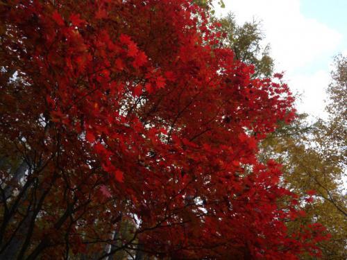 紅葉見物6