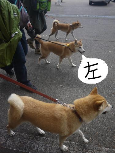 3柴女シンクロ2