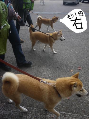 3柴女シンクロ3
