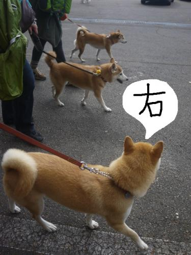 3柴女シンクロ1