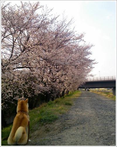 桜とさくら2