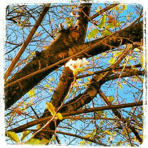 fc2blog_20121010093246cc9.jpg