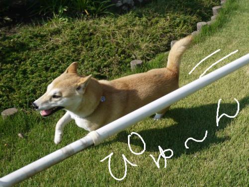 sakura1_20120913161012.jpg