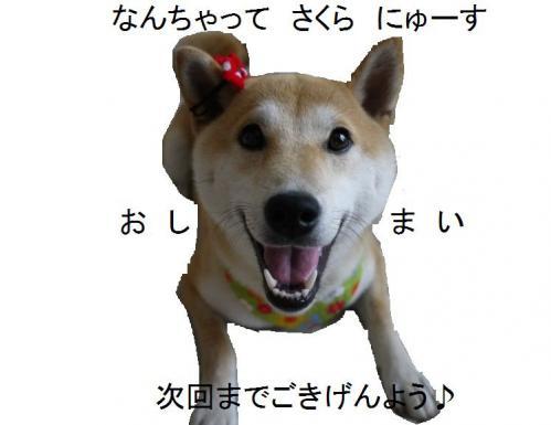 sakura3_20120712153224.jpg