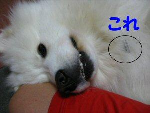 blog1142.jpg