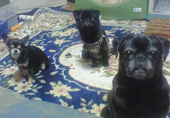 2012.11.28 黒い犬集まれ~1