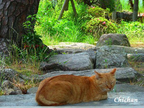 chichan11_20120620220059.jpg