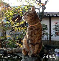 sandy70-1.jpg