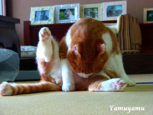 yamuyamu14_20120708011431.jpg