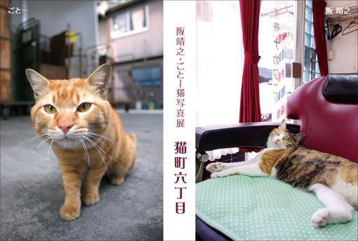 nekoroku_dm1_510.jpg