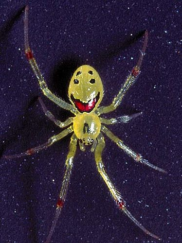 happy_face_spider_02.jpg