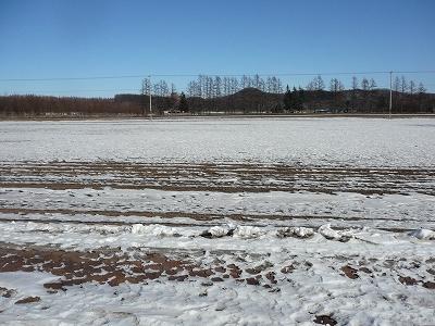 畑も土が見える・・・