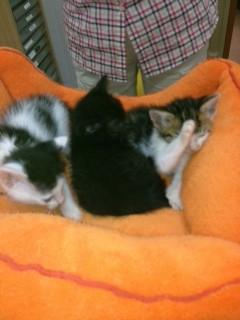 ガリコバディ子猫2
