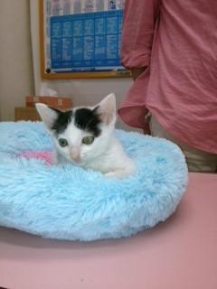 ガリコ2バディ子猫