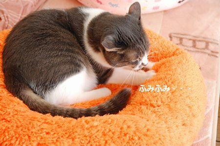 20121205miikun.jpg