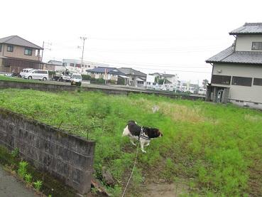004_20120526201046.jpg
