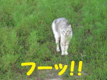 023_20120530193226.jpg