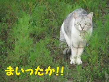 024_20120530193240.jpg