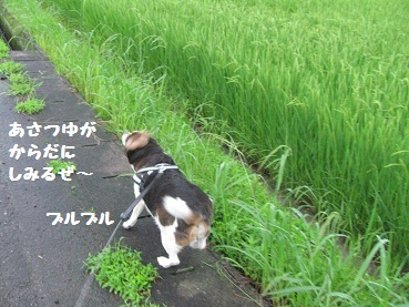030_20120630081801.jpg