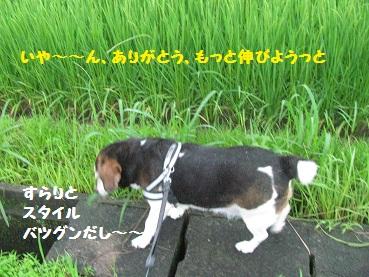 033_20120630081842.jpg