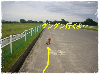 aima2.jpg
