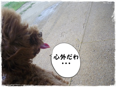 aima9.jpg