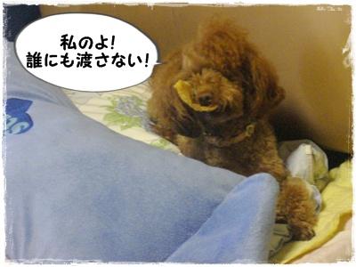 butamimi1_20120905153700.jpg