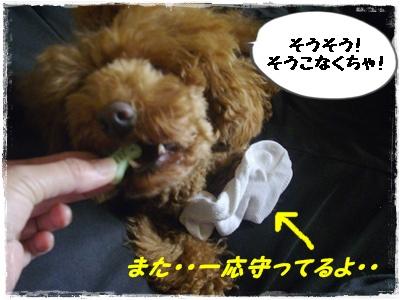 cyoushi6.jpg