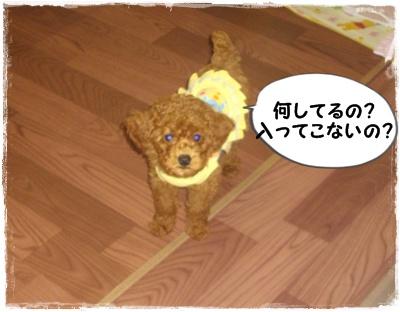 fuyu3.jpg