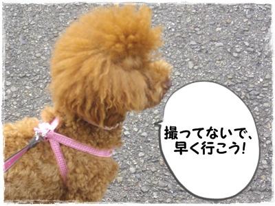 hanesu5.jpg