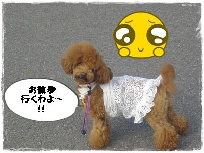 lanchi1.jpg