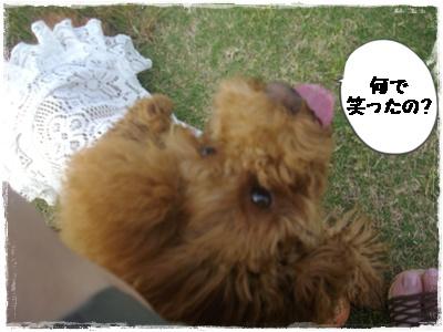lanchi5.jpg