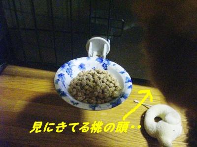 ribonchan2.jpg