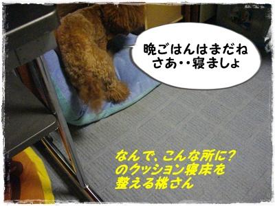 ribonchan4.jpg