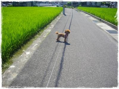 shinsatsu.jpg