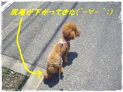 shinsatsu1.jpg