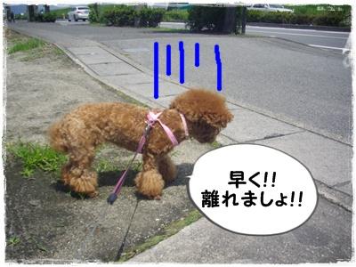shinsatsu10.jpg