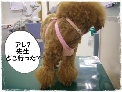 shinsatsu8.jpg