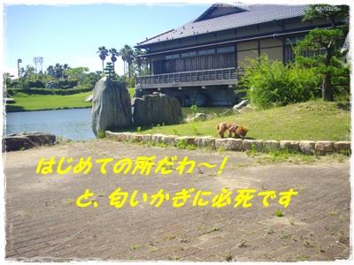 yakyu5.jpg