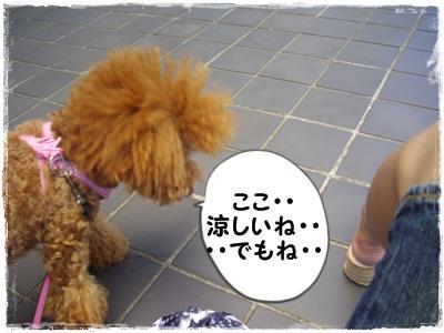 yakyu8.jpg