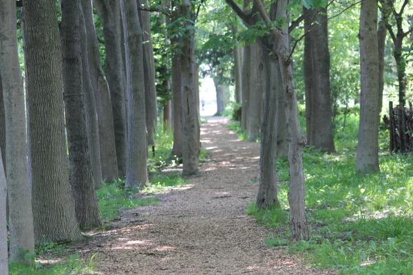 豊平公園4