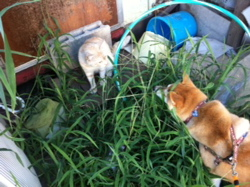 ネコと近いコナツ