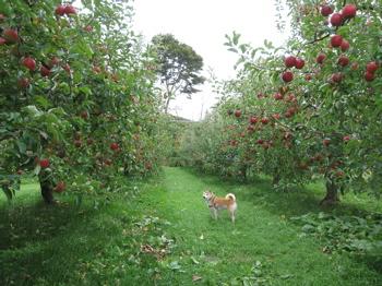 宮田りんご園