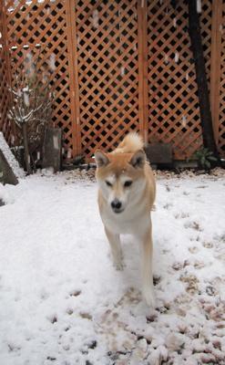 雪 コナツ