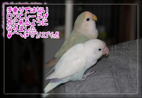 肩に乗る2羽