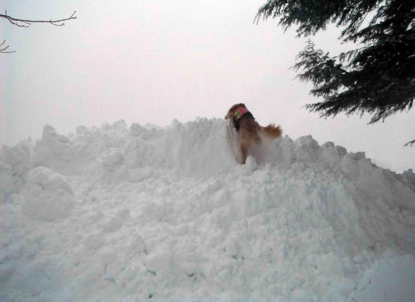 風雪の寒い朝(3)