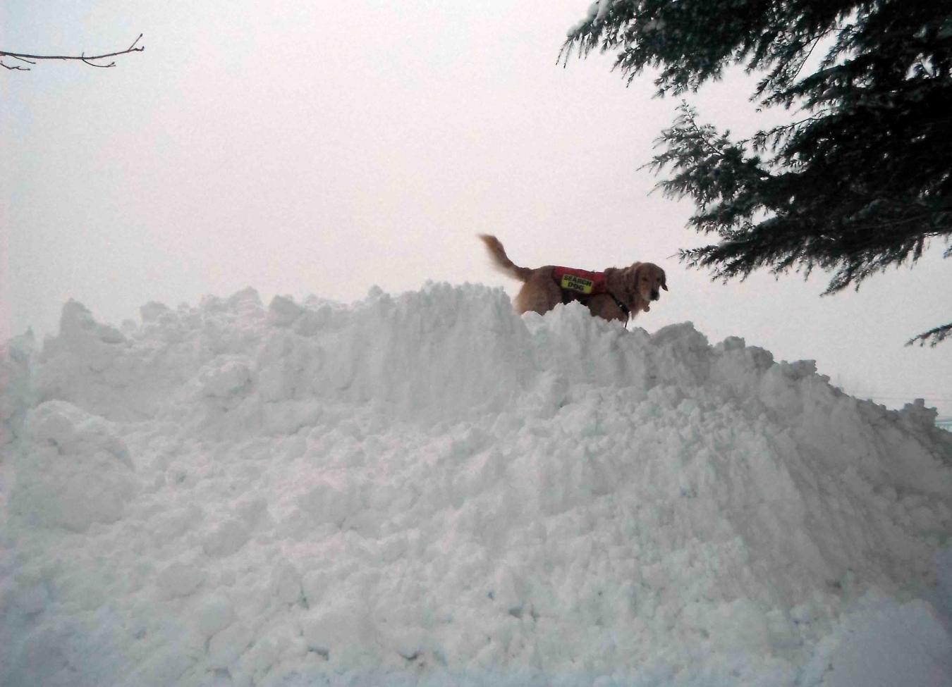 風雪の寒い朝(4)