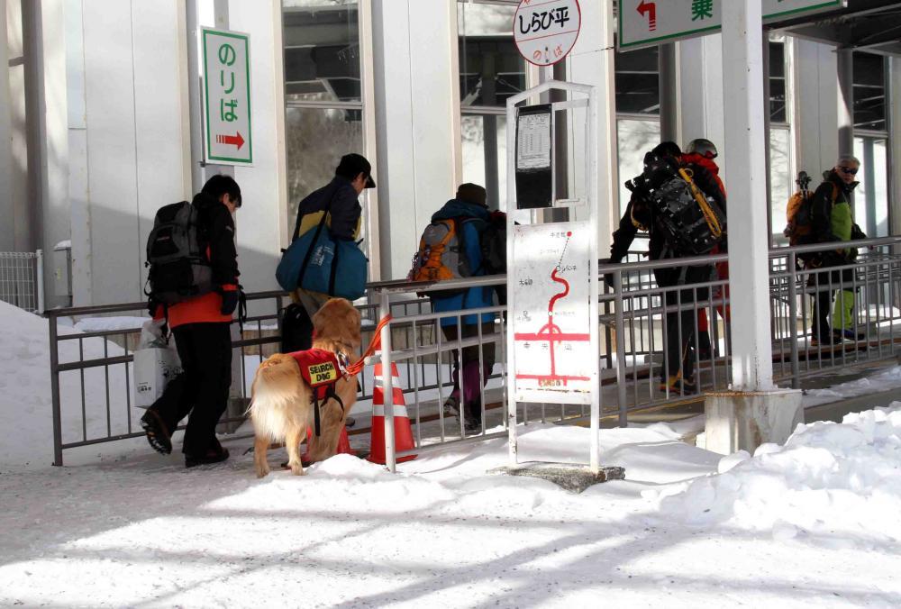 2013 全国雪崩 2月09日(5)