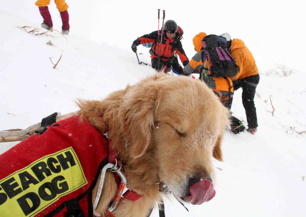 2013 全国雪崩 2月09日(47)